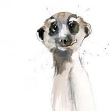 """""""Meerkat"""" by Becky Brown"""
